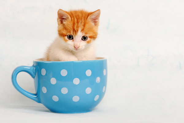 http://freedesignfile.com/upload/2016/12/The-mini-kitten-in-the-cup-HD-picture.jpg