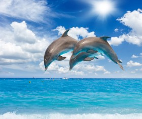 Warm sun jumping dolphins Stock Photo 02