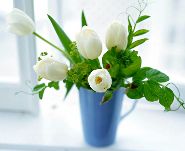White tulip flower hd picture free download white tulip flower hd picture mightylinksfo