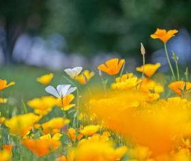 Yellow and White Wildflowers Stock Photo