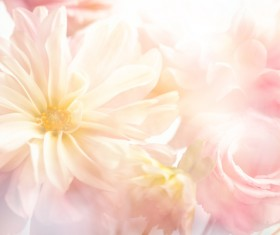 background flower HD picture