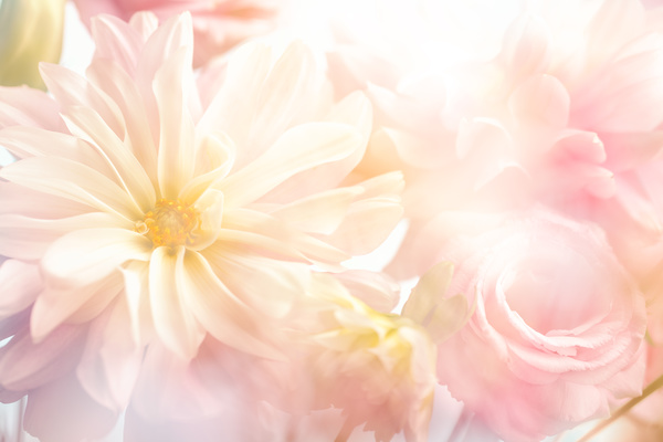 background flower hd picture free download