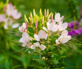 Beautiful drunk butterfly flower HD picture