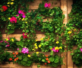 Beautiful flower wall HD picture