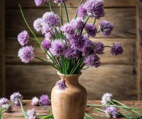 Beautiful flower with vase Stock Photo 02