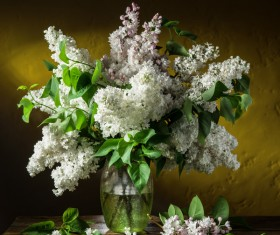 Beautiful flower with vase Stock Photo 05