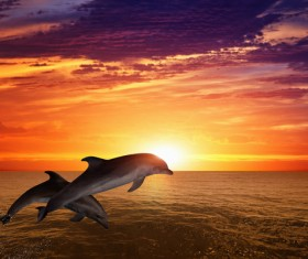 Beautiful ocean sunset with dolphin Stock Photo