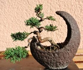 Bonsai modeling Stock Photo