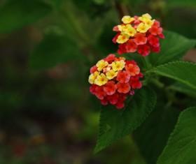 Bright colored plum Stock Photo