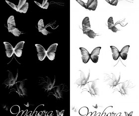 Elegant butterflies photoshop brushes set