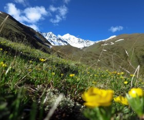 Flowers and distant snow-capped mountains Stock Photo