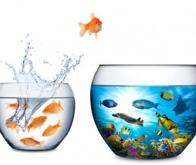 Goldfish jumping out of the wate HD picture 01