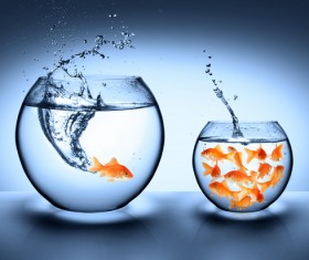 Goldfish jumping out of the wate HD picture 03