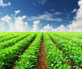 Growing crops Stock Photo