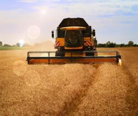 Harvesting wheat Stock Photo