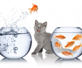 Jump out of goldfish and cat with water HD picture