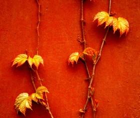 Red climbing wall tiger Stock Photo