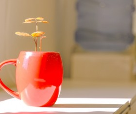 Red small potted plants Stock Photo