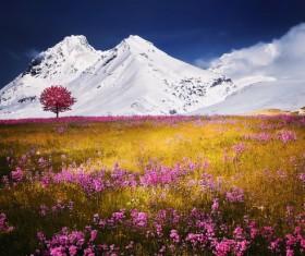 Snow Mountain flowers Stock Photo