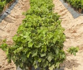 Solar valley of vineyards Stock Photo 01