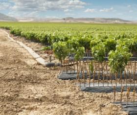 Solar valley of vineyards Stock Photo 02