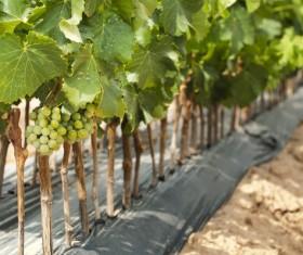 Solar valley of vineyards Stock Photo 04