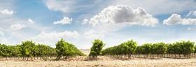 Solar valley of vineyards Stock Photo 05