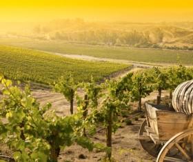 Solar valley of vineyards Stock Photo 06