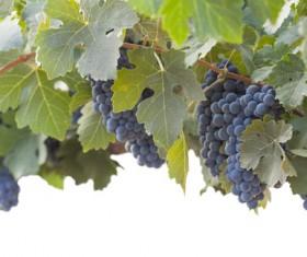 Solar valley of vineyards Stock Photo 07