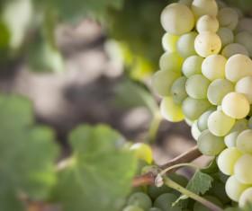 Solar valley of vineyards Stock Photo 09
