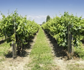 Solar valley of vineyards Stock Photo 15
