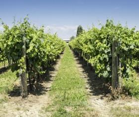Solar valley of vineyards Stock Photo 15