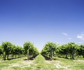 Solar valley of vineyards Stock Photo 16