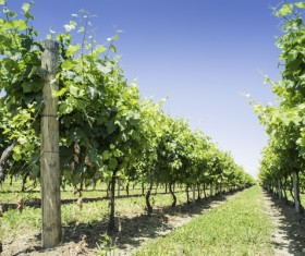 Solar valley of vineyards Stock Photo 17
