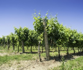 Solar valley of vineyards Stock Photo 18
