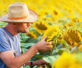 View Sunflower farmers Stock Photo 02
