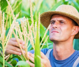 View farmer situation of the crop Stock Photo
