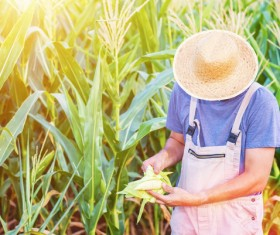 View the situation of farmers in corn Stock Photo 02