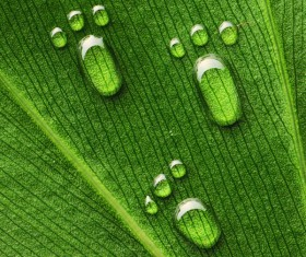 Water drops on the leaves feet Stock Photo