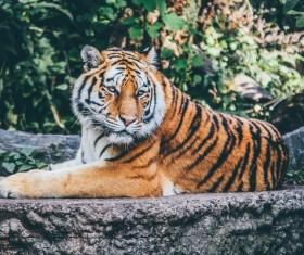 Wildlife Park tiger Stock Photo