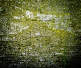 Wood background texture Stock Photo 20