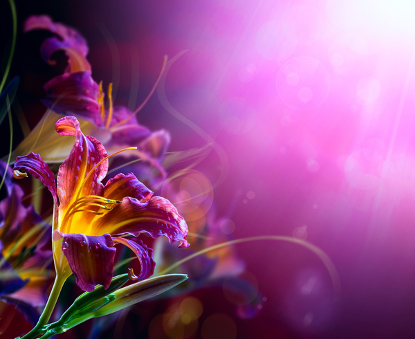 Abstract Floral Background Hd Picture 02 Free Download