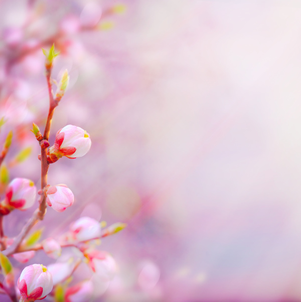 Abstract Floral Background Hd Picture 03 Free Download