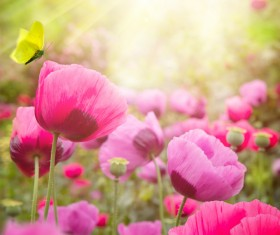 Abstract Floral Background HD picture 04