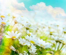 Abstract Floral Background HD picture 05
