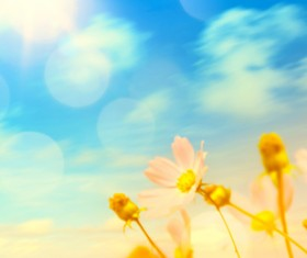 Abstract Floral Background HD picture 08