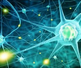 Active nerve cells Stock Photo 06