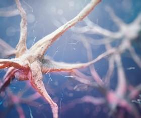 Active nerve cells Stock Photo 07