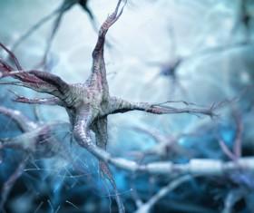 Active nerve cells Stock Photo 08