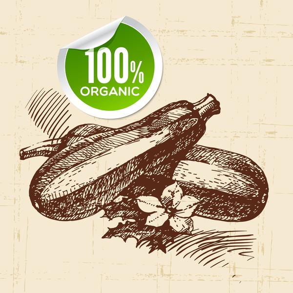 Angle melon hand drawn sketch vector